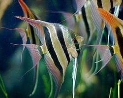 Landlords Stories – The Angel Fish Saga