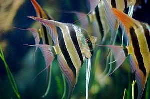 Landlords Stories - The Angel Fish Saga