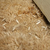 Carpet moths – who pays for new carpets?