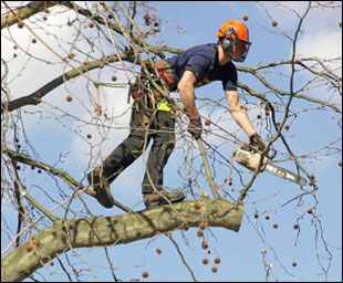 Overhanging Tree Problem