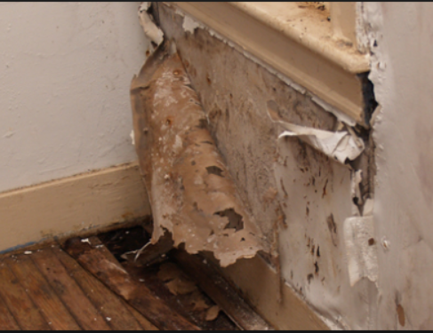 Advice on Damp problems – are these damp specialists trying to make a quick buck?
