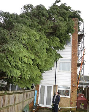 Mortgage delay caused by a tree
