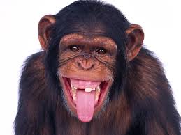 Most Landlords Are Monkeys