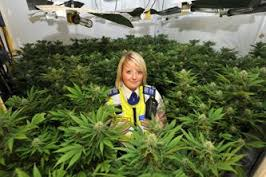 Landlords urged to be vigilant for tenants cultivating cannabis