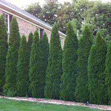 Garden upkeep Health and Safety?