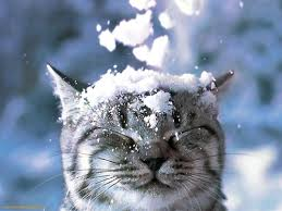 winter kitty