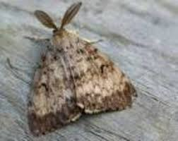 Moth Infestation – HELP please