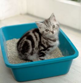 Who should pay for cat litter leak damage?