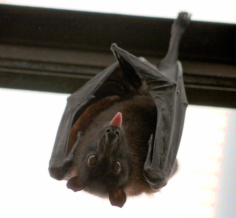 Beware of Bats