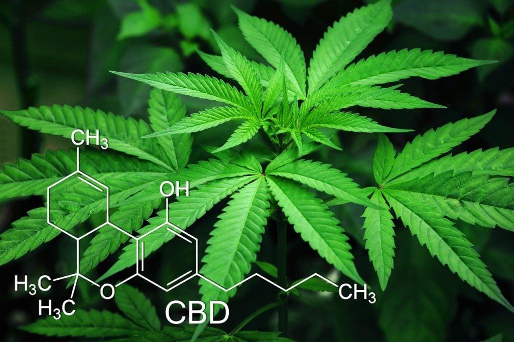 Landlords beware – cannabis farming on the increase