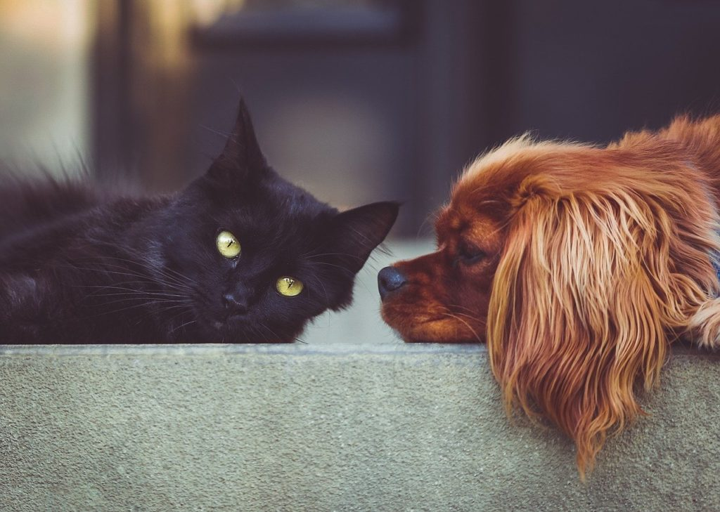 Cats and dogs policy shortsighted