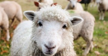 CGT minefield on inherited family farm?