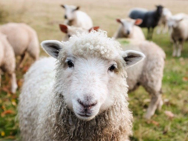 Tenant rights at the end of an agricultural licence?