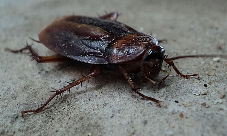 That Cockroach time of year!